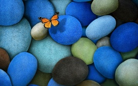 Beautiful butterfly on rocks (click to view)