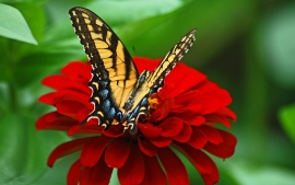 Butterfly on the red flower
