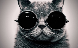 Cat with goggle