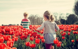 Children playing in the land of tulips