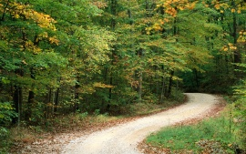 Country Road in Autumn, Nashville, Indiana