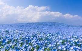 Hitachi Seaside Park Japan