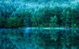 Japan Trees Deep Green Water Reflection