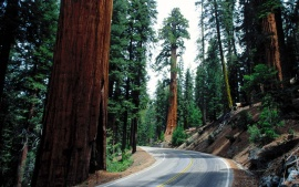 Redwood Road, Sequoia National Park