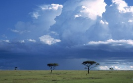 STORM CLOUDS OVER SAVANNAH WITH ACACIA TREES