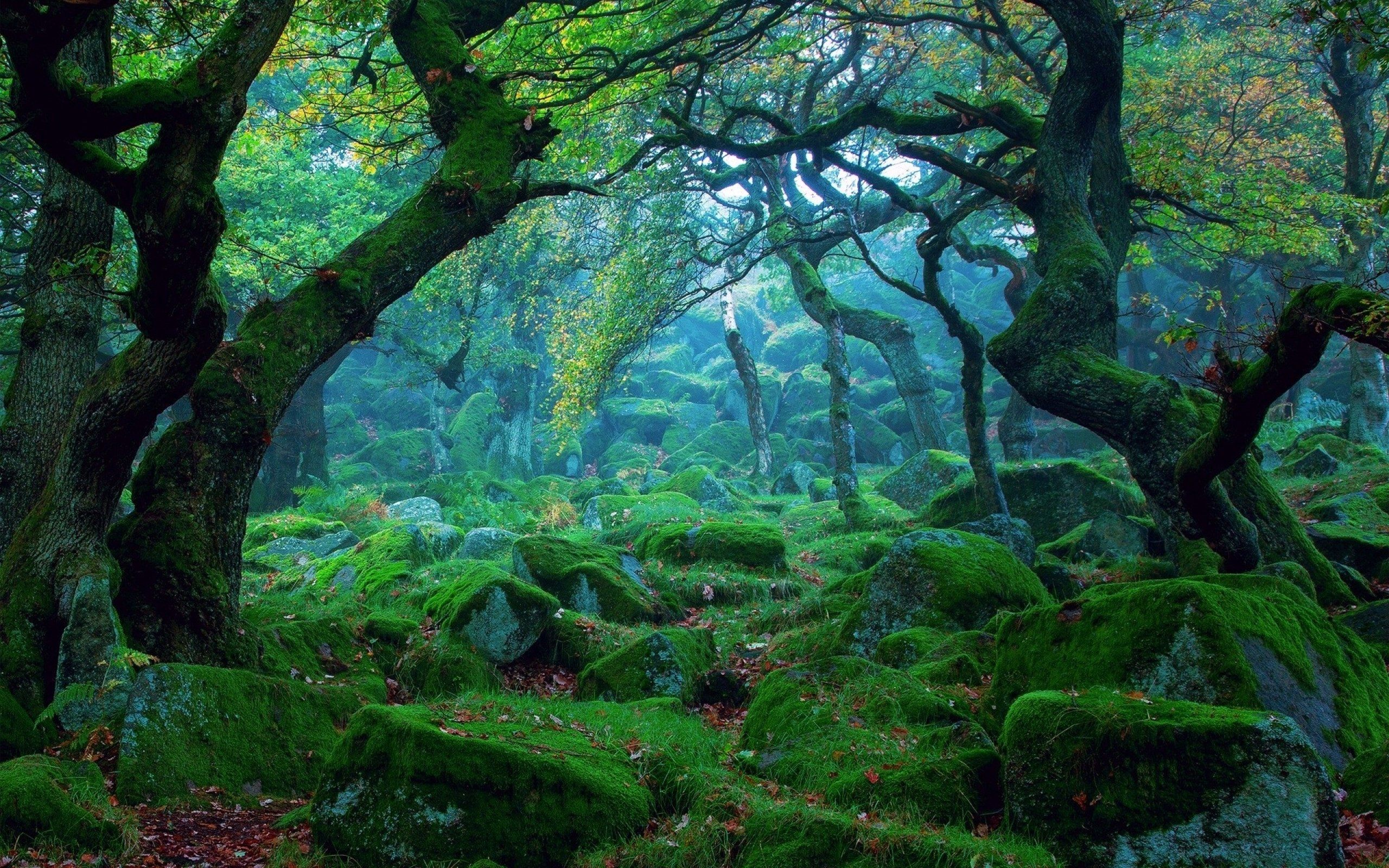 Green Stones and Forest Landscape wallpapers